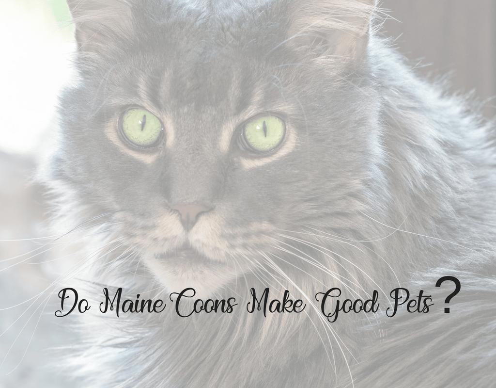 do maine coons make good pets