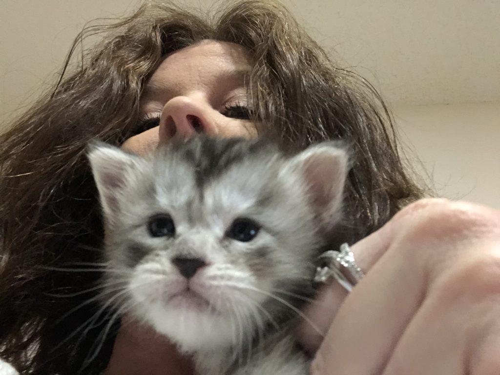 kitten care guide week 3