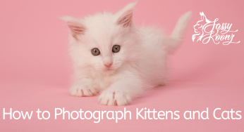Maine Coon Breeders - How To Choose the Very Best One