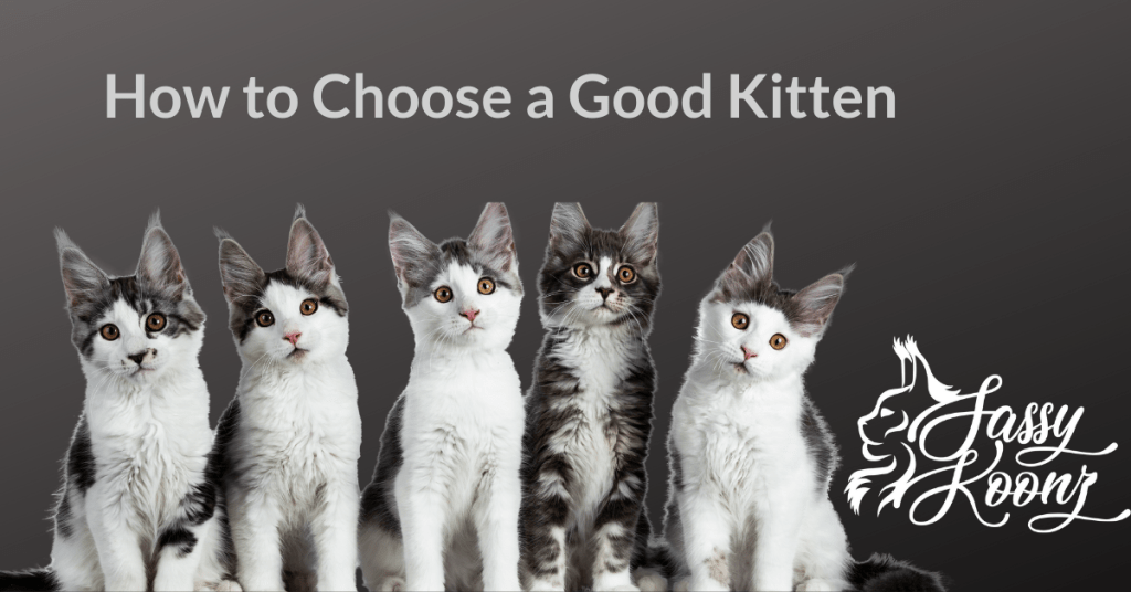 how to choose a kitten