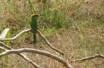 Closer shot of green color bird, Murd Beach