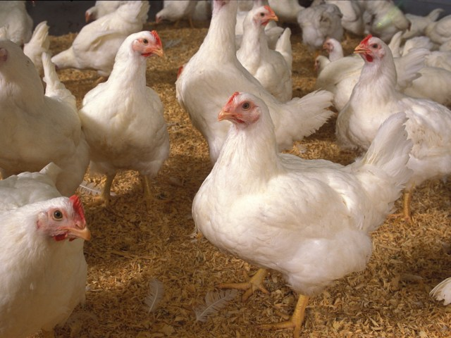 Second avian flu outbreak reported in the North West and Lesotho bans eggs from SA