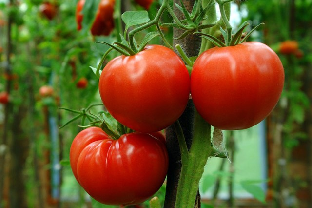 Tomato prices are down sharply – but you're still paying more than double last year's price