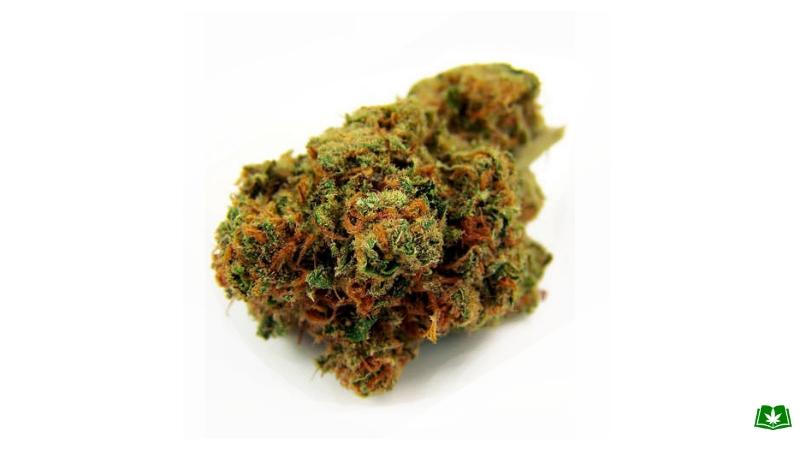 Florida Medical Marijuana - Haleigh's Comet