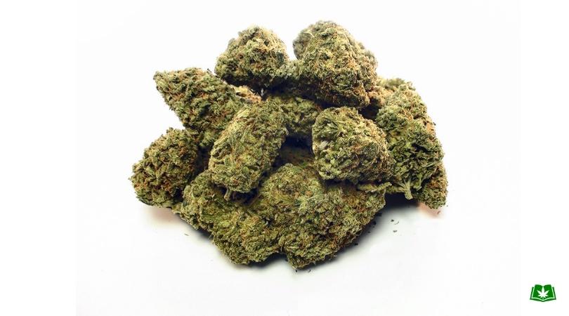 Florida Medical Marijuana - White Widow