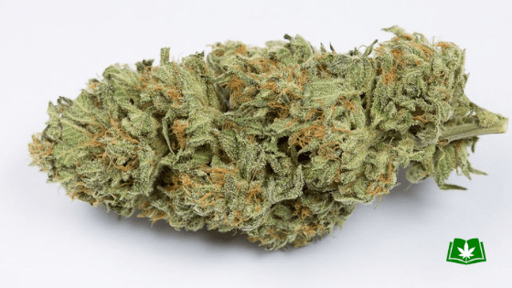 Bubba Kush Strain (Buy Online) | Side Effects, Grow Tips & More