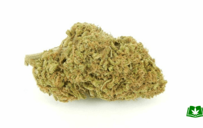 Pineapple Express Strain (Buy Online)   Side Effects, Grow Tips & More