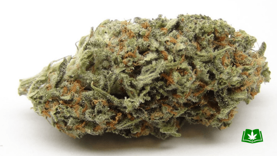 Trainwreck Strain (Buy Online) | Side Effects, Grow Tips & More