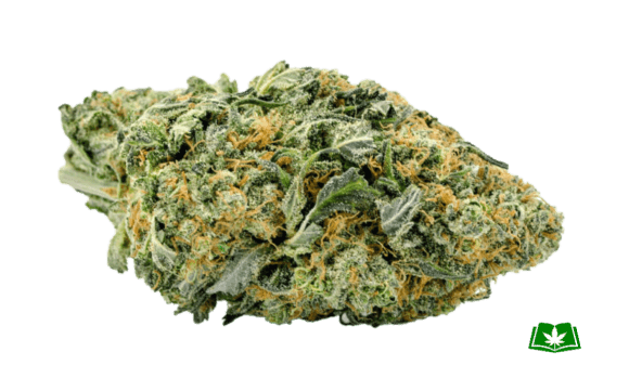 Northern Lights Strain (Buy Online)   Side Effects, Grow Tips & More