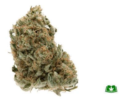 Chocolope Strain (Buy Online) | Side Effects, Grow Tips & More