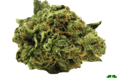 Master Kush Strain (Buy Online) | Side Effects, Grow Tips & More