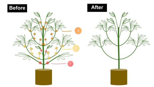 how to grow marijuana - pruning tips