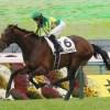サトノダイヤモンド、有馬記念に参戦せず年内休養