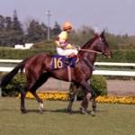 番外編①JRA競走馬歴代賞金ランキング?ランキング外だけど心に残る名馬たち!