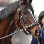 綺麗だった馬、かっこ良かった馬、可愛かった馬