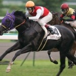 日本史上最も運が悪かった馬はショウナンマイティ