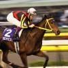 史上最強牝馬はブエナビスタ