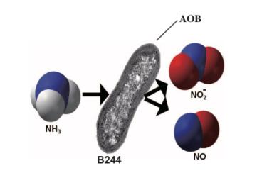 AOBiome B244