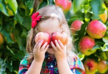 Cute little girl holding two apples in apple orchard