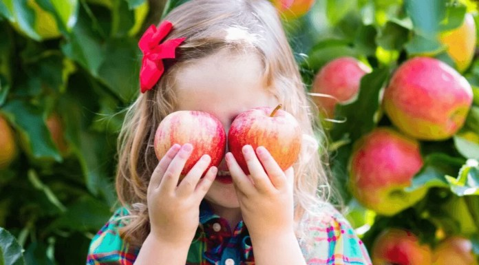 little girl holding apples in apple orchard
