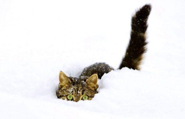 Cara menghilangkan jamur pada kucing - Menjaga suhu ruangan kucing