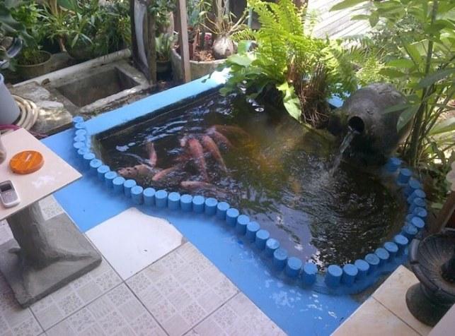 desain kolam ikan hias