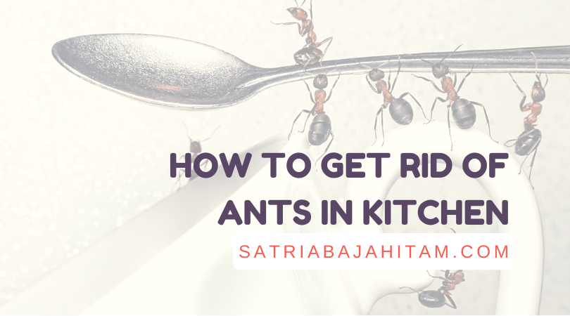 how to get rid of ants in kitchen, chalk, vinegar, cinnamon, herbs, peppermint