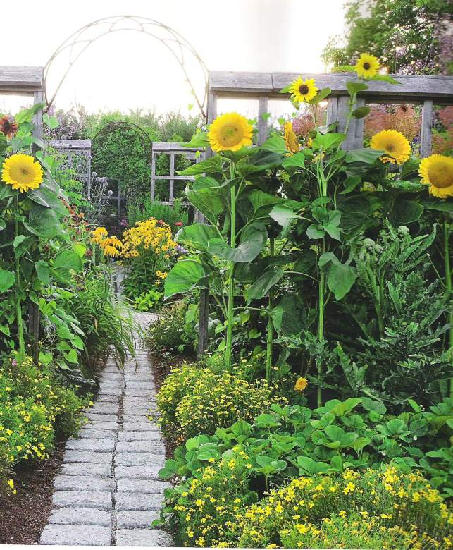 Brick Walkway and Sunflowers - pinterestcom