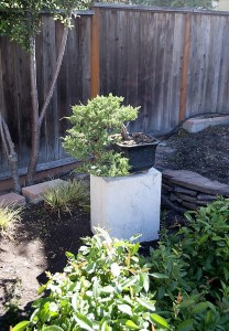 Stone Bonsai Stands