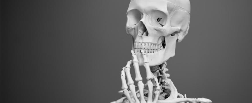 Wichtige Mineralstoffe für gesunde Knochen – die richtige Ernährung