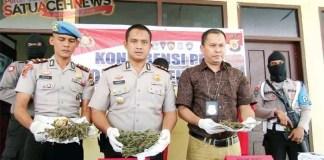 Ganja di Pendopo Bupati Aceh Barat