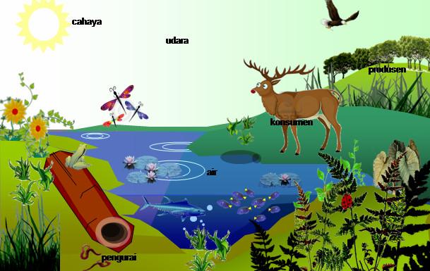 ekosistem adalah