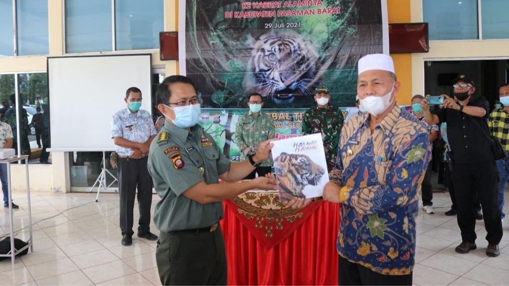 """Global Tiger Day 2021, KLHK Lepasliarkan Harimau Sumatera """"Sipogu"""""""
