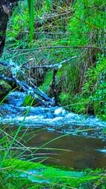 A stream flows