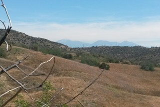 Mt. Baldy in the distance