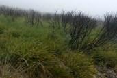 Burned shrubs in Deerweed