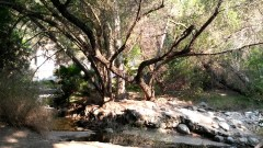 Walnut Creek 1