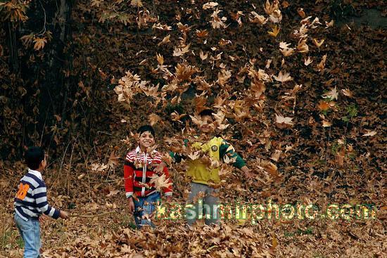 Autumn in Kashmir (2/4)