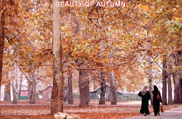 Autumn in Kashmir (1/4)