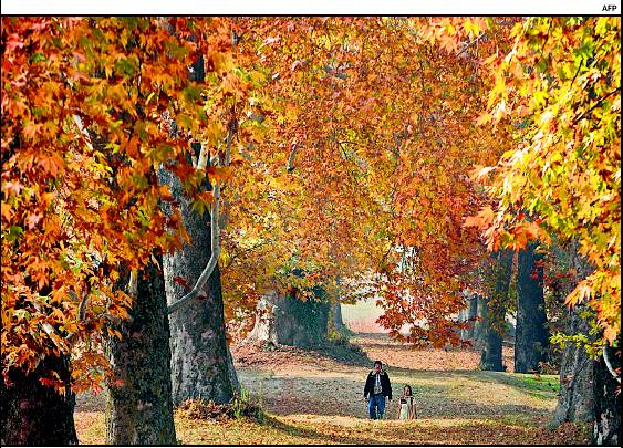 Autumn in Kashmir (4/4)