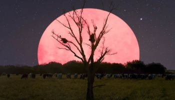 Pink Supermoon going to appear in India on April 8