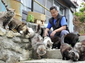 Остров кошек Таширодзима