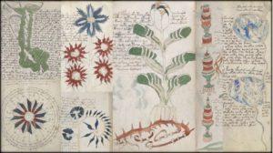 Тайна манускрипта Войнича