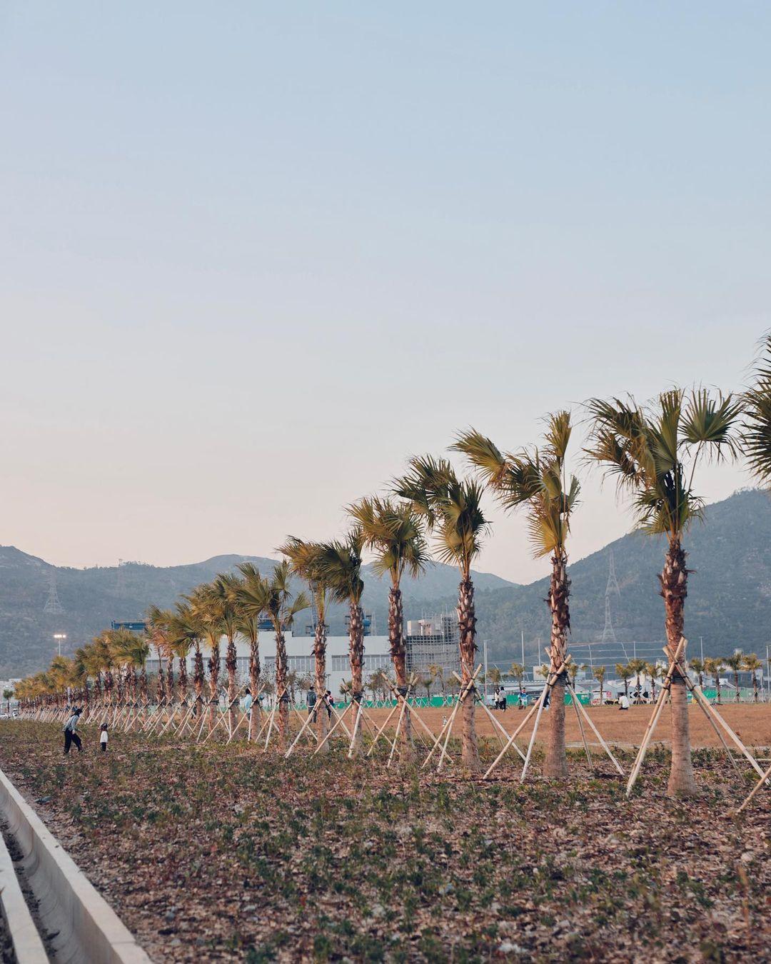 一整排的樹木與草地,周末一齊去親親大自然啦(圖片來源:IG@emily_0224)