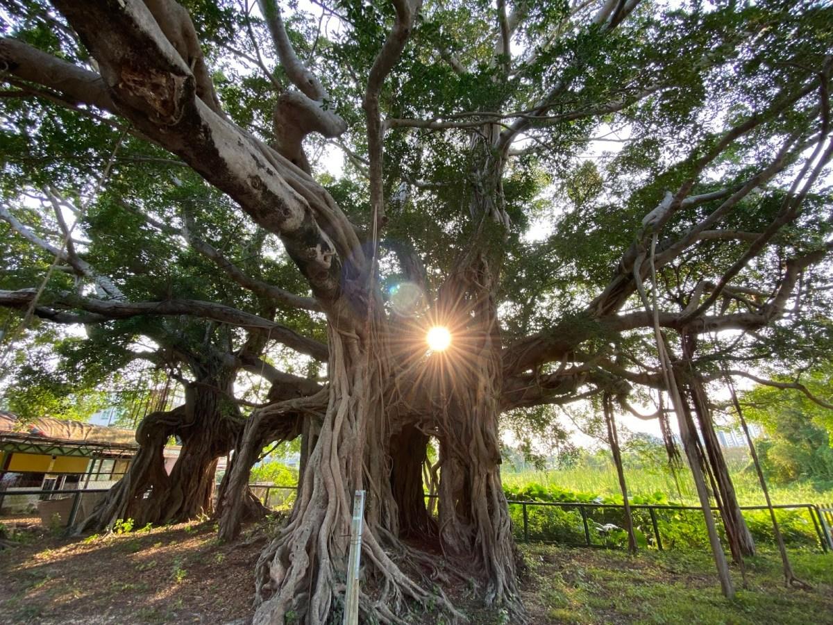 水尾村樹屋 (圖片來源:悠遊全世界)