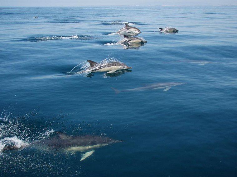 dolfijnen boot