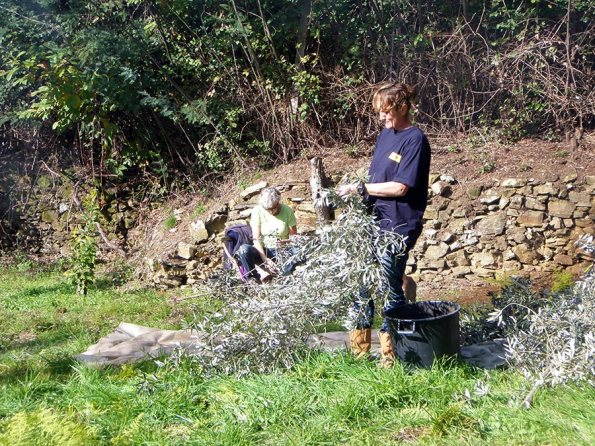 Agro-toerisme: Plukken | Saudades de Portugal