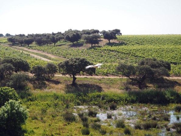 Portugal Património Natural Alentejo