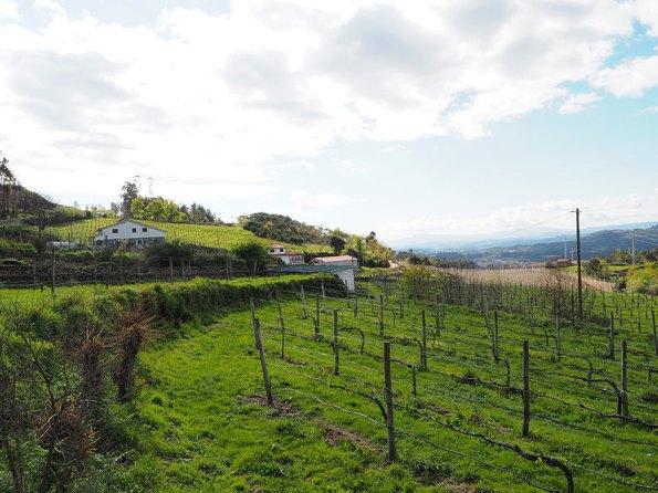 Wijnbouw Minho