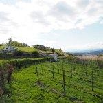 Bos in Barreiros: Wijnbouw Minho